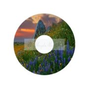 Wildflowers Custom DVD Cover